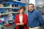 Professor, Molecular Neurobiology Laboratory, Françoise Gilot-Salk Chair
